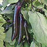 25 - Samen: Shikou Hybrid Aubergine Seeds - Verwenden Shikou in Wokgerichte Grill es in Lange Scheiben!