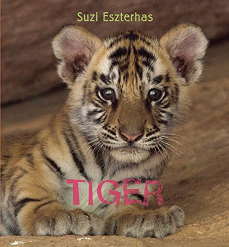 Tiger (Eye on the Wild)