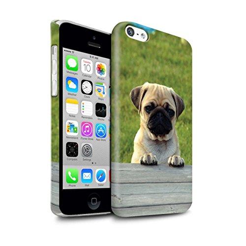 Beschermhoesje voor Apple iPhone 5C / serie: rassen/hondenhonden/hondenriemen - schattige pug/doguillo