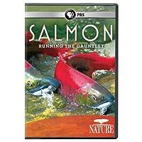 Nature: Salmon [DVD] [Import]