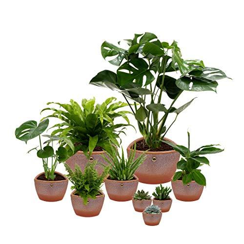 Set van 9 planten met bijpassende terracotta plantenpotten - kamerplanten voor binnen met verschillende groottes - Clark