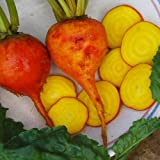Zoom IMG-1 plant world seeds golden beet