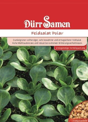 Feldsalat Polar, Vorteilspackung