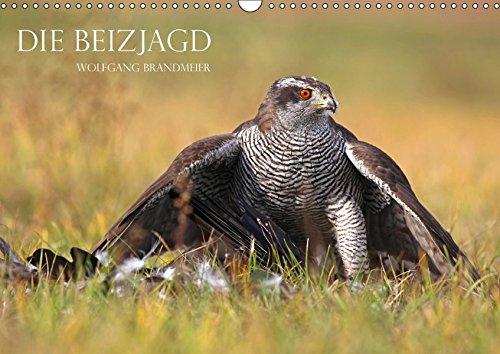 Die Beizjagd (Wandkalender 2019 DIN A3 quer): Falknerei und Beizjagd in Perfektion (Monatskalender, 14 Seiten ) (CALVENDO Tiere)