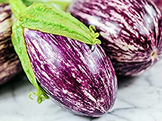 20+ Organically Grown Shooting Stars Striped Eggplant Seeds, Heirloom Non-GMO, Meaty, Purple and White, Not Bitter and Super Delicious, from USA