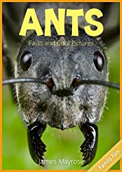 Ants Fun Facts and Cool Pictures