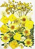 Naturales Flores Prensadas Reales para Decoraciones Florales Flores Prensadas Secas para Joyería de Resina Flor Prensada Mezclada para Scrapbooking Arte Manualidades (Amarillo)