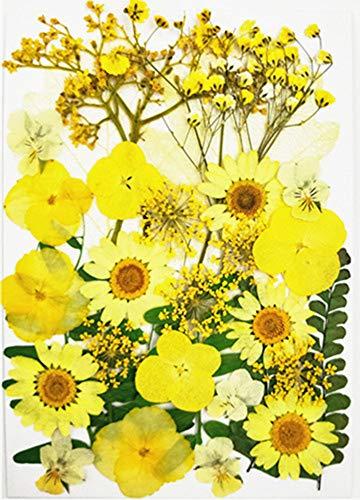 Flores Secas Manualidades flores secas  Marca
