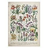 Cartel educativo botánico Setas Champiñones Identificación Gráfico de referencia Diagrama Ilustración Arte de la pared Lienzo Pintura 40x60 CM N marco