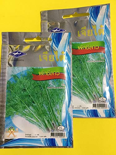 PLAT FIRM Germination Les graines: 6.600 SEED / 2 PCS x 10 G THAI VEGETABLE Anethum graveolens L. CHIA TAI PLANT