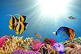 AMtxkj Paisaje de los Fondos marinos-Frameless-50x75cm,Imagen de Carteles e Impresiones de Animales para decoración de habitación de niños y bebés