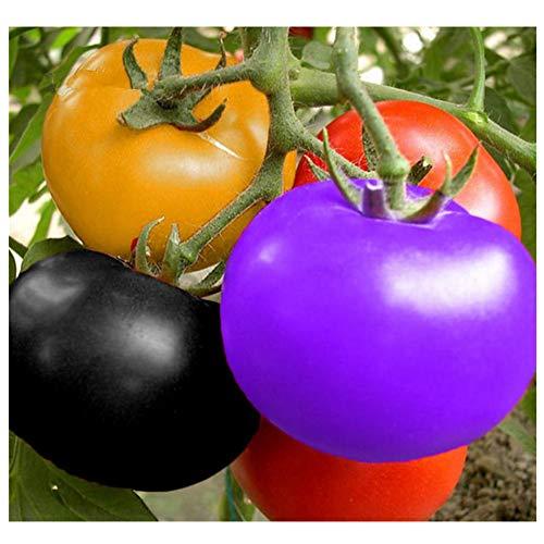 Tomatensamen, 100pcs / pack Regenbogen-Mehrfarben-Tomaten-Garten-organische Fruchtgemüsesamen