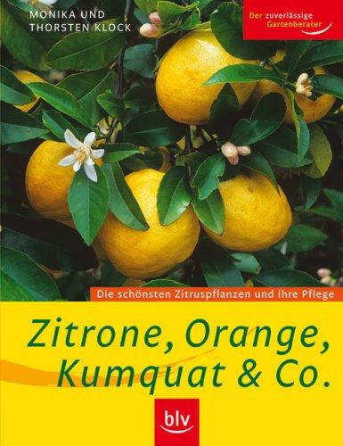 Zitrone, Orange, Kumquat & Co.: Die schönsten Zitruspflanzen und ihre Pflege