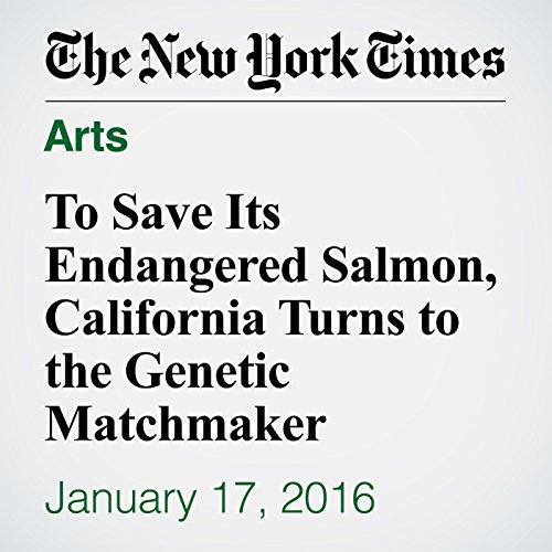 To Save Its Endangered Salmon, California Turns to the Genetic Matchmaker audiobook cover art