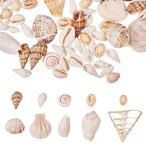 PandaHall - 10 tipos de diminutas conchas marinas en espiral para hacer velas, decoración del hogar, fiesta temática de playa, decoración de bodas, jarrones de pecera