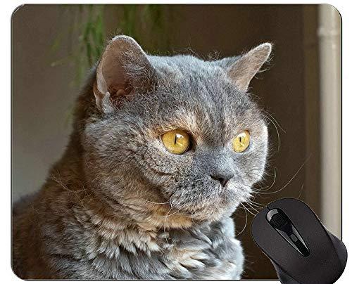 Mousepads und Cute British Shorthair Cat Mouse-Pads Jetzt zugreifen: 15% Rabatt auf ALLE Produkte!