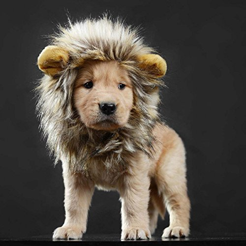 lcfun Lion Mane Costume for Cat Puppy - Pet Wig with Ears, Cat Clothes for Halloween Party