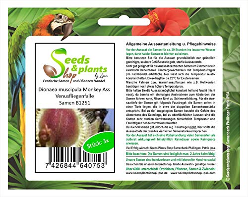 Stk - 3x Dionaea muscipula Monkey Ass Venusfliegenfalle Samen B1251 - Seeds Plants Shop Samenbank Pfullingen Patrik Ipsa