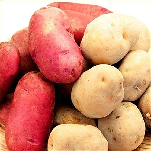 北海道産 新じゃが レッドムーン&インカのめざめ セット 10kg ジャガイモ 馬鈴薯 野菜 北海道 お取り寄せ