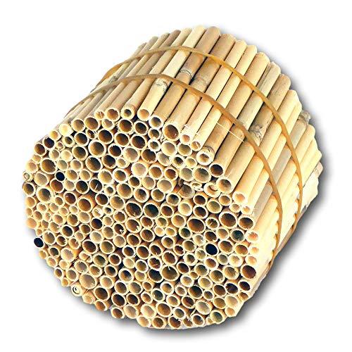 Hiss Reet® Schilfrohrhalme Premium als Insektenhotel Füllmaterial I geschält I Ideal auch als Niströhren für Wildbienen, Bienenhotel geeignet I Verschiedene Längen (S - ca. 11 cm Länge)