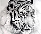 kit pintura DIY diamante bordado conjunto blanco tigre taladro diamante pintura 5D imagen de piedras decoración de la pared animales 30x40cm