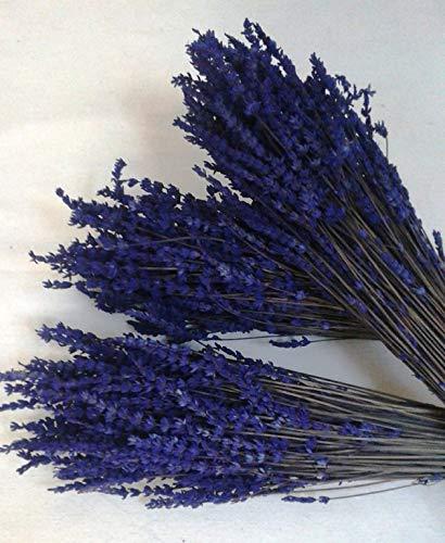 Flores Frescas Online Ramos Lavanda Natural Preservada 3 Unidades Portes Gratis
