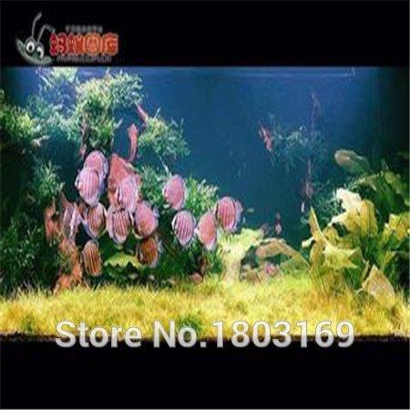 200 Graines Aquarium / paquet plantes semences réservoir de poissons d'aquarium décoration herbe plantes graines
