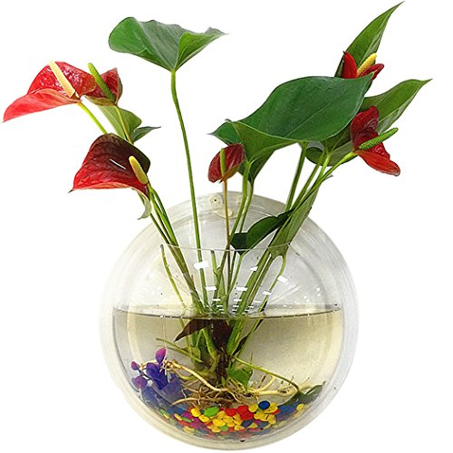 Tinksky Fish Tank Wand hängenden Clear Glas Vase Blume Pflanze Topf Aquarium Bowl-Startseite-Dekoration 15 cm …