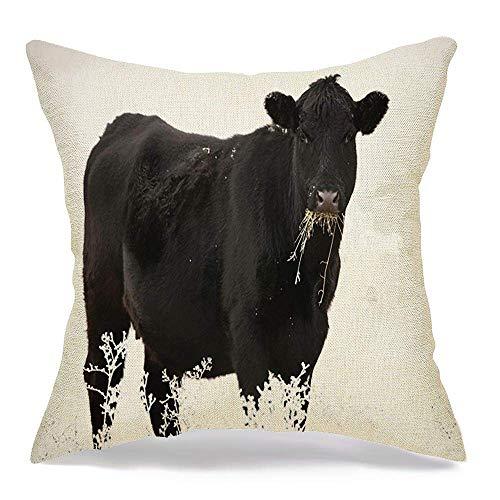 Funda de Cojine Throw CojínMañana hermoso contraste Black Angus vaca rumiar animales pastoreo nariz parques de vida silvestre al aire libre Fundas para almohada 45X45CM