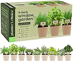 Classroom Herb Garden - Best Gift Ideas for Male Teachers