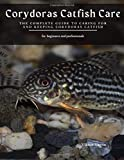 Corydoras Catfish Care: The Complete Guide to Caring for and Keeping Corydoras Catfish