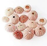 TNSYGSB Natürliche rosa Seeigel ...