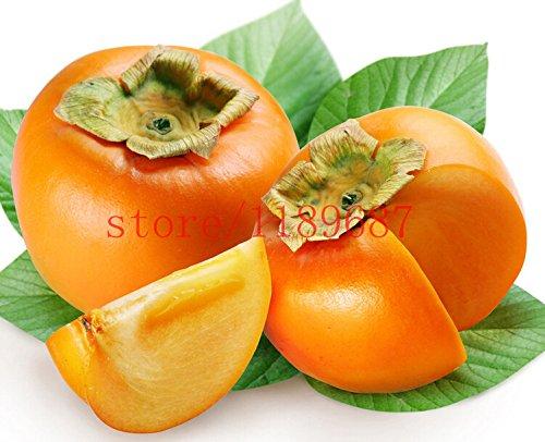 100 pcs kakis 2015 nouvelles semences Plantes succulentes Persimmon graines arbres fruitiers graines pour la maison jardin plantation