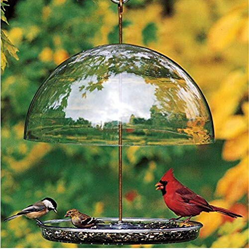 Droll Yankees 344318 DCF Dorothys Cardinal Domed Bird Feeder, 15 Inch