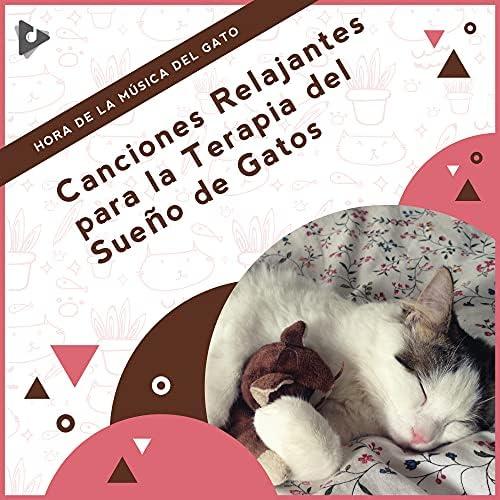 Hora de la Música del Gato, Música Relajante para Gatos & Música Calmante para Gatitos