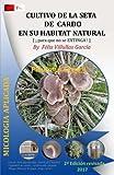 Cultivo de la Seta de Cardo en su habitat natural: Asociacion del hongo Hongo Pleurotus Eryngii y la planta Eryngium Campestre