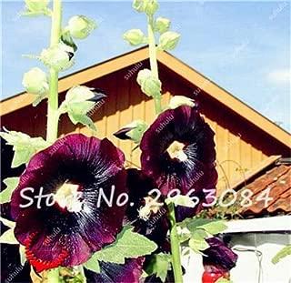 100 Pcs/Bag Hot Sale Hollyhock Seeds, Indoor Plant Seeds, Perennial Flower Seeds,DIY Home Garden Flower Ornamental Bonsai