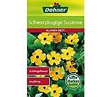Dehner Blumen-Saatgut, Schwarzäugige Susanne, 5er pack (5 x 1.5 g)
