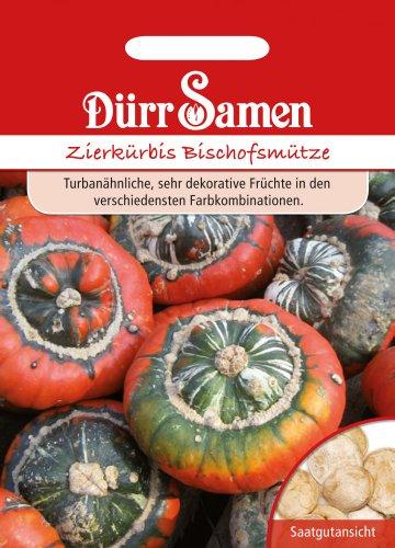 Dürr Samen 1801 Zierkürbis Bischofsmütze (Zierkürbissamen)