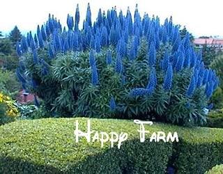 Flower seeds Echium Fastuosum - Pride Of Madeira Plant! LARGE PACK Home & Garden - 200Seeds/bag