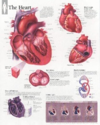 Scientific Publishing: Heart Paper Poster