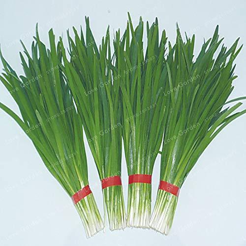 Chinesische Schnittlauch Samen Garten Topf Lauch Pflanzen Samen Für Hausgarten Einfach Anbau Gemüse Vier Jahreszeiten Pflanzen 100 Teile/beutel