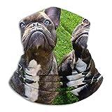 Any Way Bulldog francés Perro Cuello Polaina Bandana Calentador de Cuello pasamontañas para Hombres Mujeres Sol UV Viento protección contra el Polvo