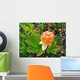 Arctic Cloudberry