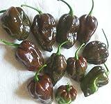 Pepper HOT Chocolate Habanero Great Heirloom Vegetable 300 Seeds Bulk Wholesale