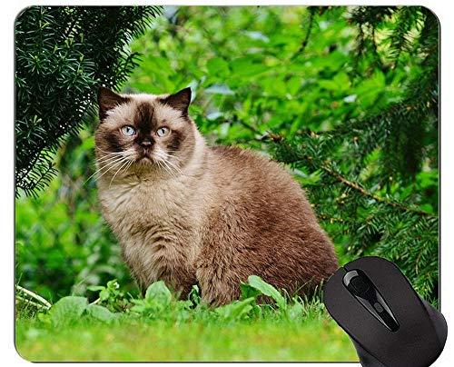 Alfombrillas de ratón, Alfombrilla de ratón de Pelo Corto para Gatos, Alfombrilla de ratón con Borde Cosido