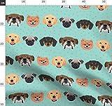 Grün, Hunde, Dackel, Bulldogge, Zwergspitz, Labrador, Mops