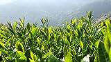 Virtually tour an organic tea garden in Hualien, Taiwan