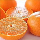愛媛県産 柑橘 みかん せとか 3kg(共選 秀品/7~15玉入り) 柑橘類 みかん ミカン 蜜柑 果物 フルーツ お取り寄せ