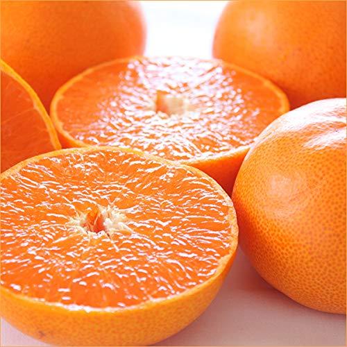 愛媛県産 柑橘 みかん せとか 3kg(共選 秀品/7〜15玉入り) 柑橘類 みかん ミカン 蜜柑 果物 フルーツ お取り寄せ